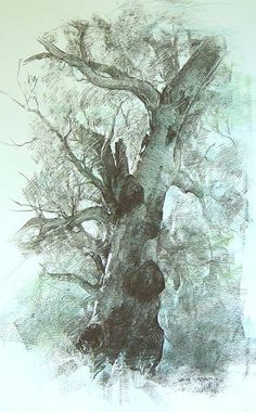 John McCartin || Towering Gum, Charcoal Tree Drawings Pencil, Art Drawings, Landscape Drawings, Landscape Art, Tree Sketches, Unique Drawings, Photo Background Images, Tinta China, Nature Drawing