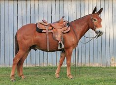I know this is a mule...