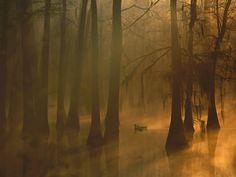 Mallard Pair Cypress Swamp Calcasieu River Lake Charles Louisiana-Photography