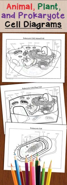 Plant and Animal Cell Printables Grades 46 Hard times