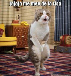 jajaja me meo de la risa - Meme Gato meandose de las Risas