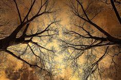 Baum, Baum Oben, Zweig, Kahlen Ast, Winter Baum, Stark