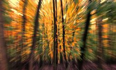 Zoom Burst Technique during autumn in a forest Royal Photography, Abstract Photography, Photography Tips, Street Photography, Camera Movements, Motion Blur, Zoom Zoom, Diy Photo, Shutter Speed