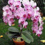 Orchidea locsolás kulisszatitkai – Balkonada Types Of Orchids, Orchid Care, Centerpieces, Bouquet, Instagram, Drawings, Amazing, Blog, Wedding
