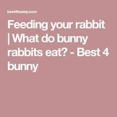 Feeding your rabbit | What do bunny rabbits eat? - Best 4 bunny