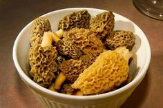 A Beginner's Guide to Hunting Morel Mushrooms | Field & Stream
