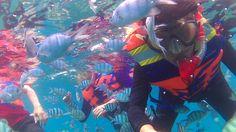 Below the sea. Arounding by fish