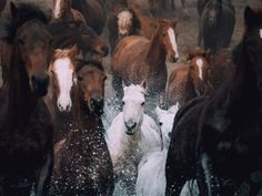 Captured in Australia, these horses were sent between paddocks through a river crossing. I set my focus point to be the water entry to capture the first splash of the lead horse and then hunted for a face in the crowd. I am very happy with the result a mixture of luck and intention.