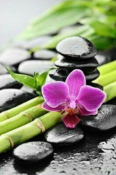 zen basalt stones and orchid with dew geburtstagswünsche - best german pins Image Zen, Deco Zen, Basalt Stone, Zen Meditation, Zen Art, Spa Day, Ikebana, Wall Murals, Orchids