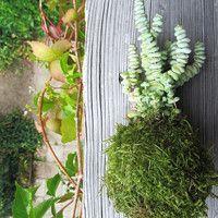 Zboží prodejce P0TMĚCHUŤ / Zboží   Fler.cz String Garden, Herbs, Plants, Herb, Plant, Planets, Medicinal Plants