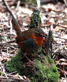 All Birds, Bird Feathers, Beautiful Birds, Hummingbirds, Animals, Bugs, Butterflies, Families, Nature