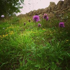Hedgerows and country roadsides bursting with wild flowers, berries & grasses... no need to travel far for #mysummerwitharthur #arthritis #spoons #countrylife #spoonies #weekend #relax #wellbeing #outside #freshair #countryliving #simplethings #hedgerows #natural #countryside #greenliving #instapic #instagood #love #photooftheday #happy #picoftheday #summer