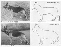 german shepherd evolution - Pesquisa Google