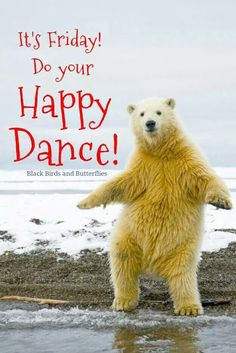 Polar bears are the largest land carnivores on the planet, equaled just by the Kodiak brown bears of southwestern Alaska. Polar bears sit at the highest point of the natural way of life in the organically rich Arctic. Happy Friday Quotes, Friday Meme, Good Morning Friday, Good Morning Quotes, Happy Morning, Friday Dance, Weekday Quotes, Funny Quotes, Funny Memes