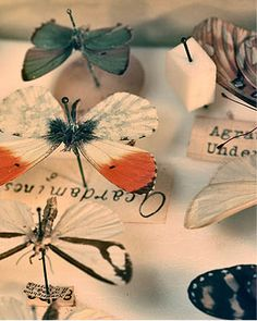 Insects are pieces of art. We love the way these are displayed with antique font labels. Natural World, Natural History, What Is A Butterfly, Butterfly Metamorphosis, Butterfly Taxidermy, Flying Flowers, Curiosity Shop, Nature Collection, Insect Art