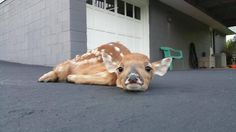 This lil' fawn having a snooze in her neighbor's driveway. | 41 Pictures For When Life Just Sucks