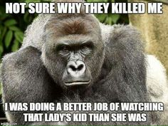 So true and so sad as another innocent animal dies because of stupid humans.