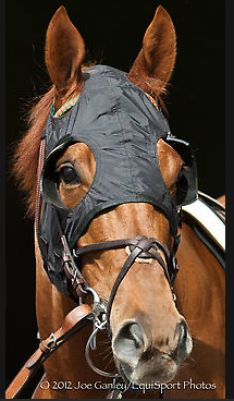 2011 Kentucky Derby winner, Animal Kingdom