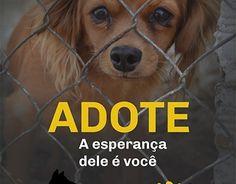 """Check out new work on my @Behance portfolio: """"Anúncio Campanha de adoção""""…"""