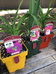 Daylilies are low-maintenance flowering perennial plants known for their abundance of cheery blooms. Here's how to plant daylilies in your garden. Day Lilies Care, Reblooming Daylilies, Organic Mulch, Lavender Blue, Plant Nursery, Flowers Perennials, How To Level Ground, Flower Petals