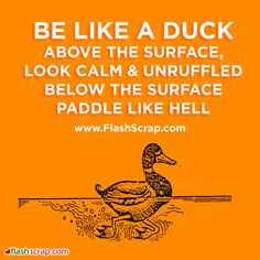 """Be like a duck. Above the surface, look calm and unruffled, below the surface, paddle like hell!"""