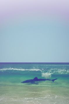 #Ocean #Beach #Sea #Shark #Sand #Sharks #Wave #Waves
