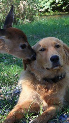 dog_deer_friendship .