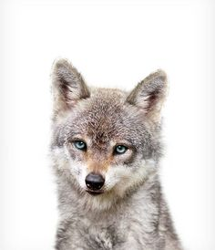 Baby woodland animals Baby wolf print PRINTABLE art Nursery