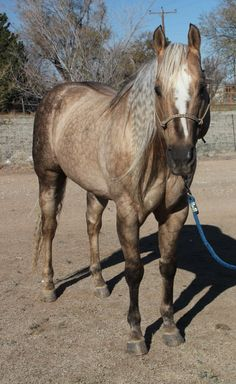The Late Quarter Horse Stallion Fuel Charger.
