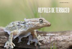 Es Madrid no Madriz Magazine Reptiles, Fauna, Madrid, Magazine, Natural, Animals, November, Animais, Animales