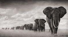 Nick Brandt en el paraíso africano - Cultura Colectiva - Cultura Colectiva