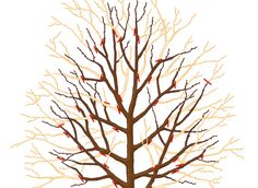 Taille hivernale des arbres fruitiers au verger : méthodes et conseils pour les…
