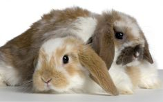 Ultra HD Cute Bunnies 1920×1200