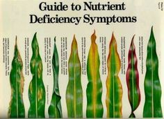 Plant deficiency symptoms and what the plant looks like with this issues.