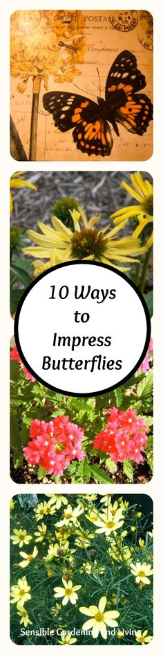 10 Ways to Impress Butterflies with Sensible Gardening and Living