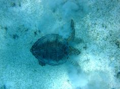 Turtle Cove, USVI, 2014