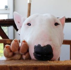 Beautiful Bully and this is his paw!