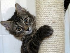 Ava with Scratching Post