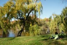 Boats, Willow Trees, Lake and an Artist in Central Park, NYC