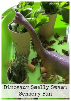Dinosaur Smelly Swamp Sensory Bin. A simple sensory activity to set up using household herbs. Create this sense of smell activity as a dinosuar small world where dinosaurs stomp on the herbs to emit their smell.