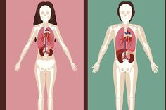 Which Internal Organ Are You? - http://tubepilot.pw/articlemarketing/which-internal-organ-are-you/  AllSuper Information http://allsuper.info