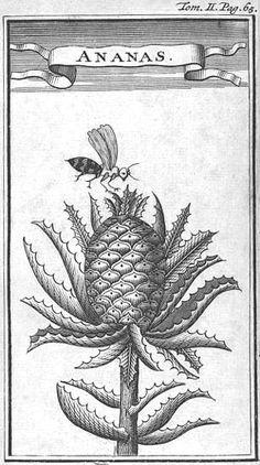 1708 François Leguat