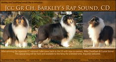 Barkley Collies and Southland Collies  -- JCC GCH Barkley's Rap Sound, CD