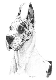 """Ryker"" - Harlequin Great Dane x pet portrait graphite drawing. Graphite Drawings, Art Drawings Sketches, Dog Sketches, Harlequin Great Danes, Autumn Tattoo, Dog Artwork, Great Dane Dogs, Dog Wallpaper, Great Danes"