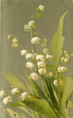 MUGUETS  lily-of-the-valley. 1907