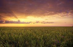 'Sea Of Wheat' ~ Rural Missouri