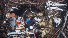 Seabirds 'blighted by plastic waste' - BBC News