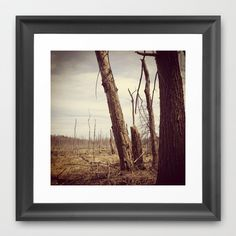 Cycle of Life - Landscape Nature Photograph Framed Art Print by Stephanie Baker - $33.00