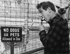 vintage everyday: No Dogs Or Pets Allowed