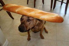 Food on my dog. I love this blog.